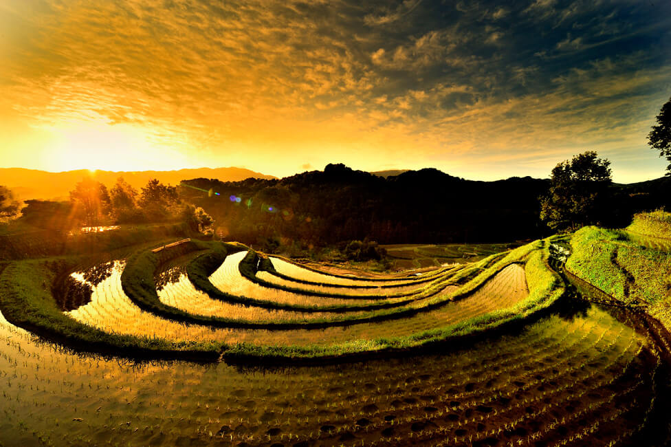 Terraced Paddy Fields at Sunrise